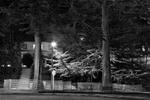 Charity Vargas: Trees Nos. 1001-1004, 2007