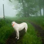 Cig Harvey: Wolfhound, Rockland, Maine, 2012