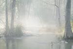 David H. Gibson: April 15, 2007, 6:50 AM