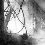 David H. Gibson: Grapevines, Cypress Creek, Wimberley, Texas, 2000