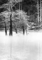 David H. Gibson: Island Cypress Grove, Village Creek, Silsbee, Texas, 1993