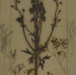 James Hajicek & Carol Panaro-Smith: Botanical/07-14, 2007