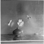 James Pitts: Three Cosmos Blue Japanese Vase Tin Background
