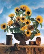 Jo Whaley: Cross-Pollination