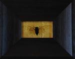 Kate Breakey: Cicada