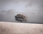 Kate Breakey: Sheoak by Ocean, Kangaroo Island, South Australia