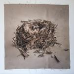 Kate Breakey: Nest 32