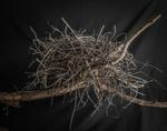 Kate Breakey: Nest 11