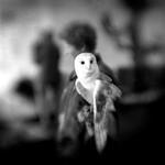 Keith Carter: White Owl