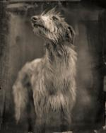 Keith Carter: Bogdog, 2014
