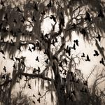 Keith Carter: Spanish Moss