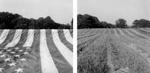 Keith Sharp: Stripes, 2003