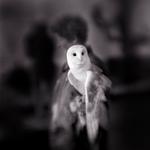 Kindred Spirits: Keith Carter – White Owl, 2004