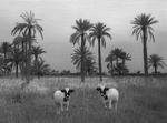 Kindred Spirits: Pentti Sammallahti – Babil, Iraq, 2004