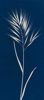Max Kellenberger: Grass #4, 2013