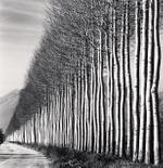 Michael Kenna: Poplar Trees, Fucino, Abruzzo, Italy, 2016