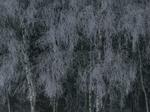 Michael Lange: WALD | Landscapes of Memory #3515
