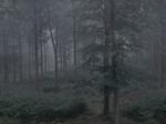 Michael Lange: WALD   Landscapes of Memory #4912