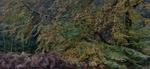 Michael Lange: WALD | Landscapes of Memory #1884