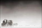 Nick Brandt: Elephant Ghost World, Amboseli, 2005