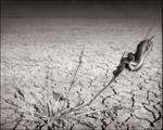Nick Brandt: Snake on Lake Bed, Amboseli, 2012