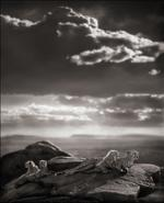 Nick Brandt: Cheetah & Cubs Lying on Rock, Serengeti, 2007