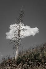 FIRE GHOSTS: Patricia Galagan – One Tree, One Cloud, 2014