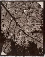 Susannah Hays: Forest Map, 1998