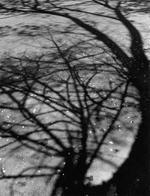 Susannah Hays: Tree Outside my Window