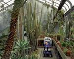 Todd Stewart: The Greenhouse, 2003
