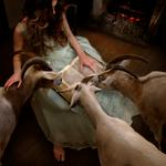 Tom Chambers: The Goatherd, 2009