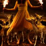 Tom Chambers: Burn to Shine