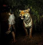 Traer Scott: Tiger, 2010